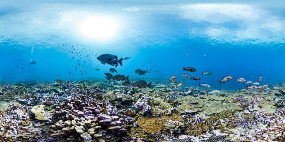An underwater view of a coral reef with ocean life.